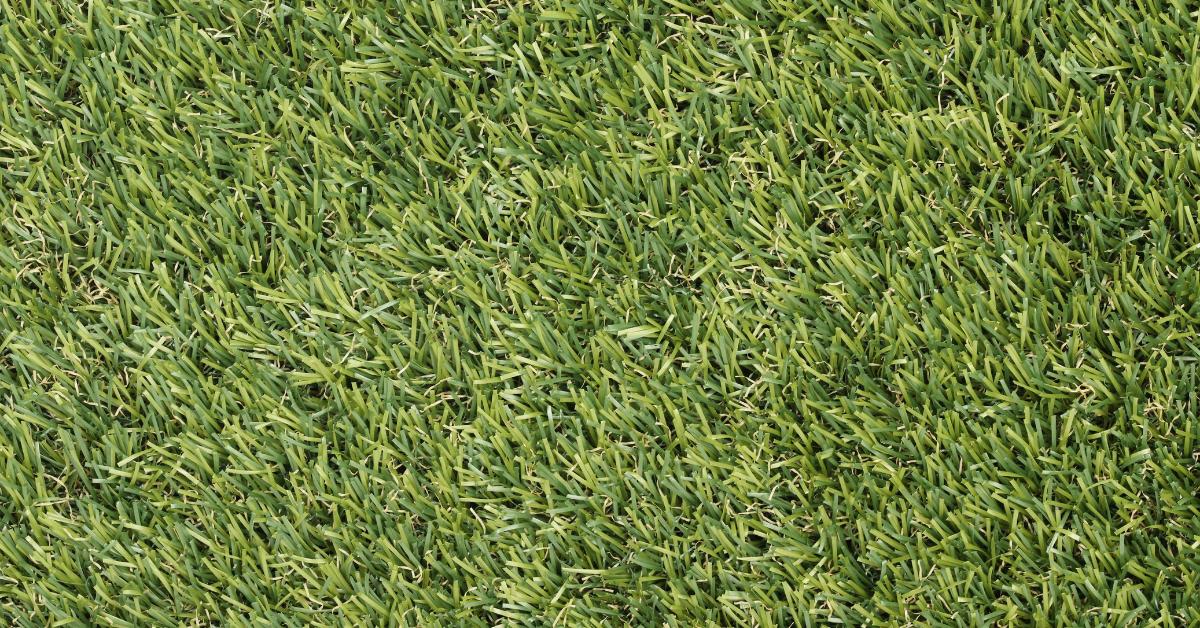 veštačka trava, proizvedena u modernoj fabrici u Holandiji